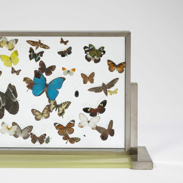 Jean-Charles Moreux, Vitrine aux papillons